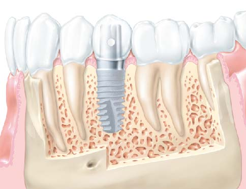 zobu anatomija-05