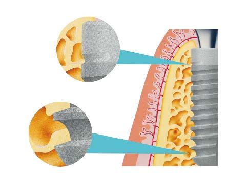 zobu anatomija-06